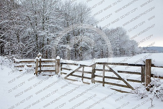 gate country snow white trees wood landscape exmoor christmas winter snow country life escape relax season deep snow freezing freeze frozen frost landscape winter snowy beauty cold scene beautiful weather frosty country snowfuk