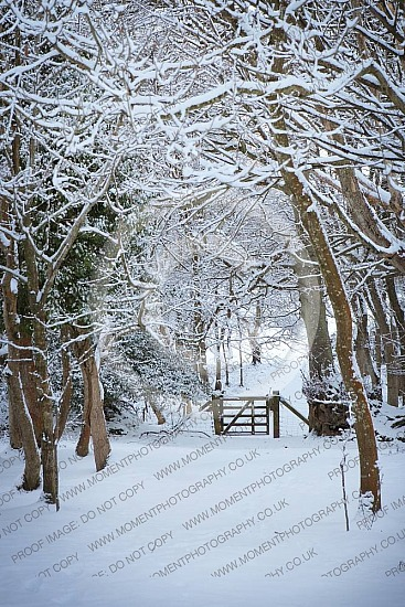 snow cold winter woods holford christmas white branches walk hike christmas cold winter snow saplings country life remote deep snow freezing freeze frozen winter walk winter wonderland gate pathway snowfall snow cover blanket ofuk