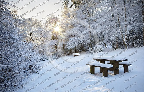 cold sunshine winter snow picnic christmas peace picnic table december snowy weather christmas winter snow cold brisk walk hike hills trees beauty landscape relaxing remote quiet alone deep snow freezing freeze frozen park benuk