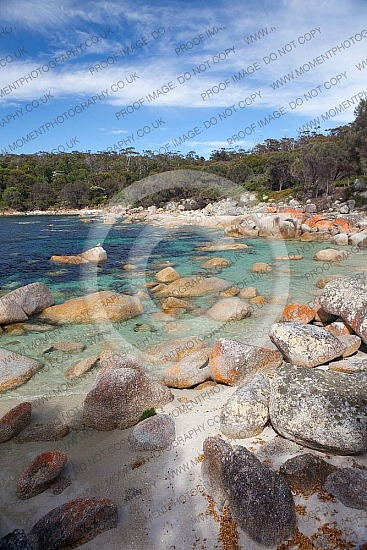 blue skybeachadventurediscoverytravelaustraliatasmaniaholidaycoastalausshadowsportrait formatsea waterparadisetranquilrestful relaxationshadeexploringexploreseascapelichenholidayspacificbay of fires tasmaniatasmanianeast coast tastravel
