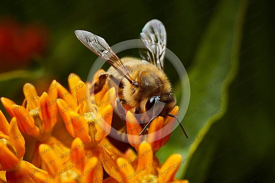 beautiful, bee, botany, flower, honey bee, horticulture, insect, nectar, plant, wings