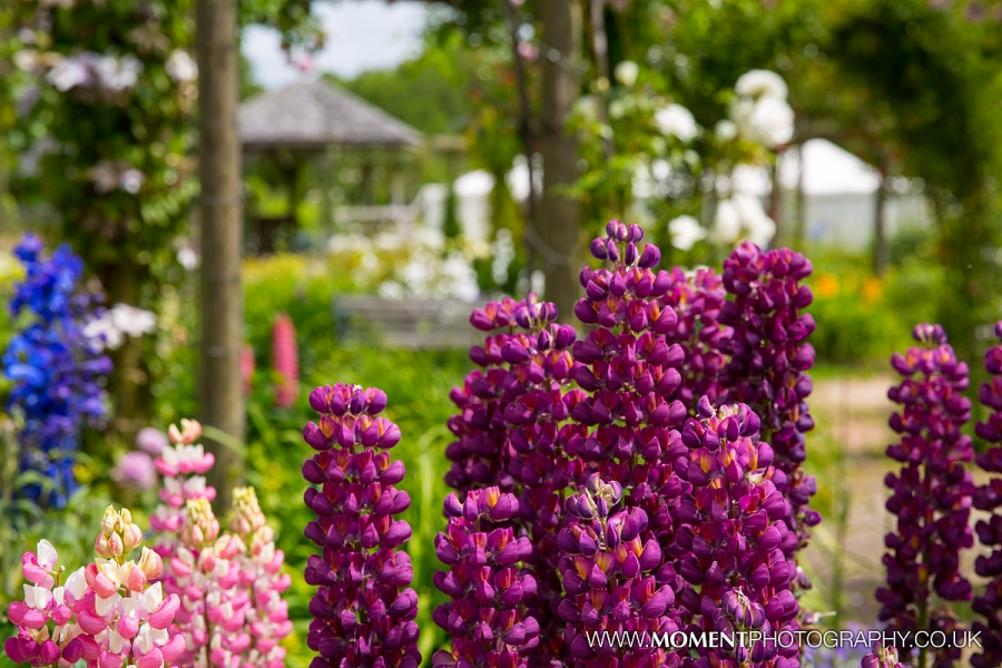 Bold and bright flowers in bloom at Gants Mill