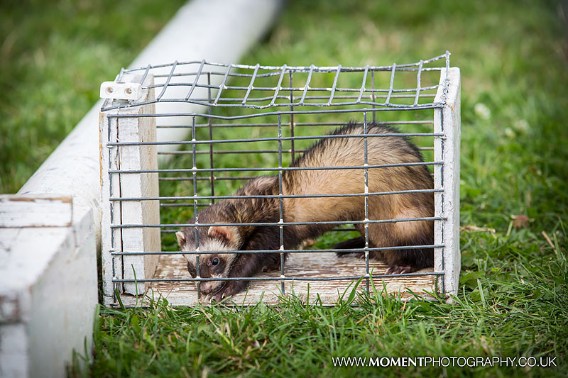 Caged ferret racing at The Lowland Games 2016