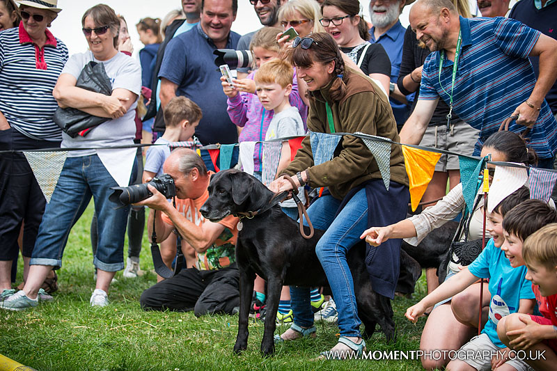 A black labrador dog gets excited by the ferret racing at The Lowland Games 2016